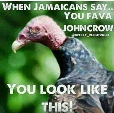 john crow jamaican vulture jamaica   jamaican