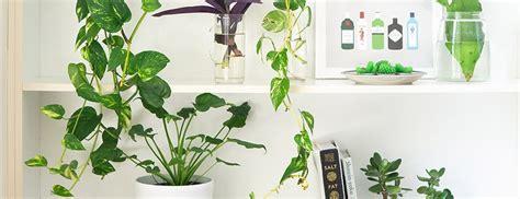 Pflanzen Zur Verbesserung Des Raumklimas by Welche Zimmerpflanzen Eignen Sich F 252 R Das Schlafzimmer