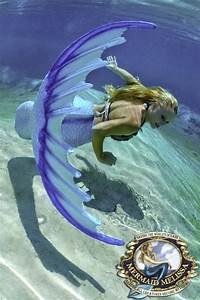 Professiona Resume Mermaid Aquatic Performers Traveling Out Of State