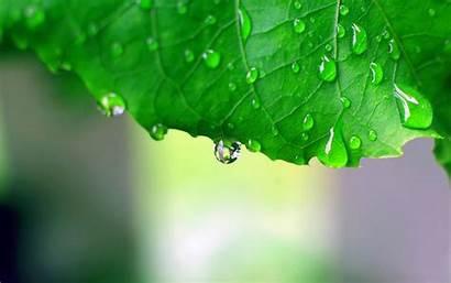 Rain Wallpapers Drops Quotes Nature Leaf