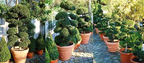 plants for gift ideas gardener s gifts