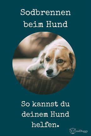 Glueckliche Haustiere Was Hunde Brauchen by Gastbbeitrag Sodbrennen Bei Hunden Hund Hunde Hunde