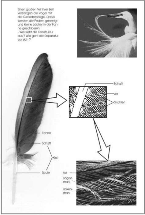 untersuchung einer vogelfeder