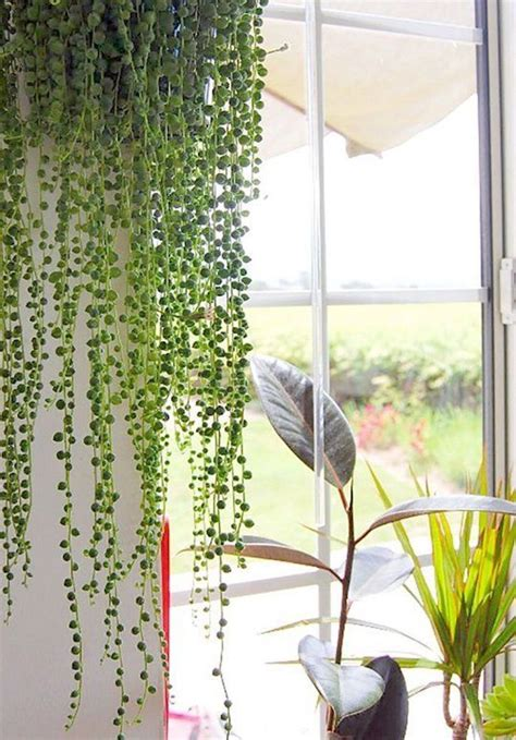 plante verte bureau plante verte appartement