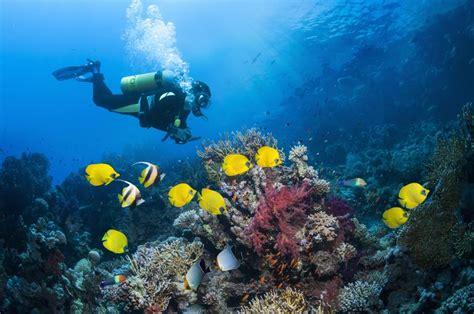 air consumption rates  scuba diving