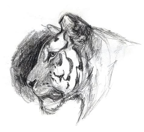 basic animal drawings images  pinterest animal