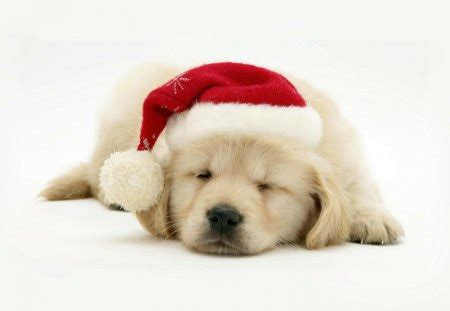 merry christmas dog dogs animals background wallpapers desktop nexus image 1287371
