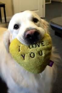 I Love You Cute Dog
