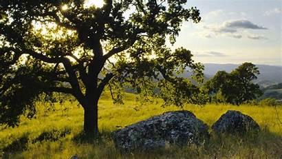 Tree Oak Wallpapers Background Sun Oaktree Cool