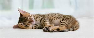 Katze Kotzt Viel : warum schl ft meine katze so viel pro plan cat ~ Frokenaadalensverden.com Haus und Dekorationen