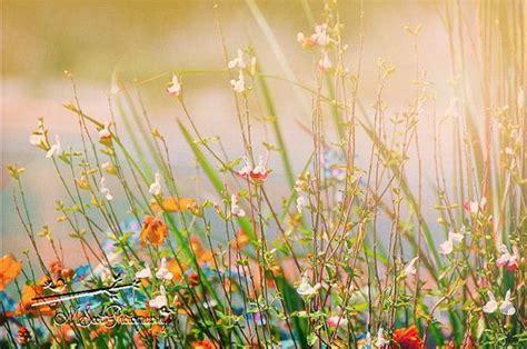 Wildflower Fine Art Print Botanical Dreamy
