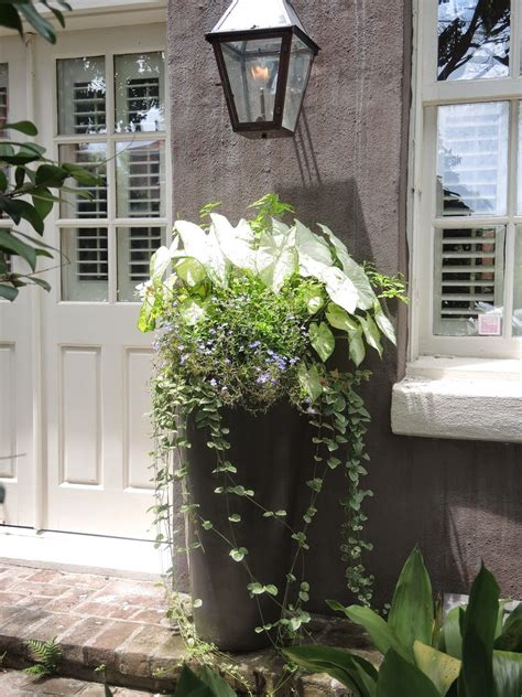 Window Potted Plants by Entrance Porch Planter White Green Charleston Sc