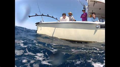 underwater goliath grouper tug fish fight giant