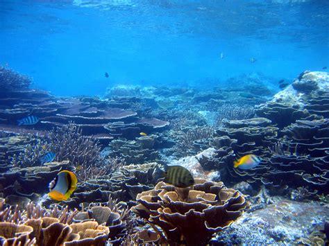 Reef Malaysia - Clean Malaysia