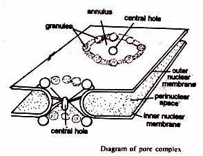 Nucleus: Morphology, Structure, Chemical Composition ...