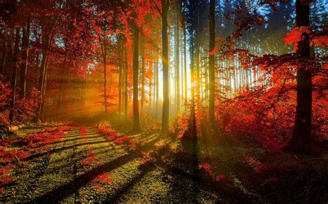autumn red forest wallpapers hd wallpapers id