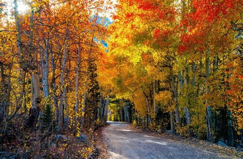 Autumn Roads Wallpapers by Autumn Road 8k Ultra Hd Wallpaper Background Image