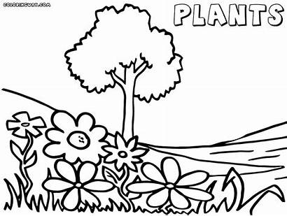 Coloring Plant Wolverine Plants Printable Animals Easy