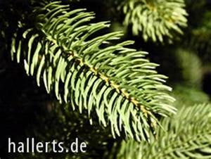 Weihnachtsbaum Kuenstlich Wie Echt : k nstlicher weihnachtsbaum produkte qualit ten beratung ~ Michelbontemps.com Haus und Dekorationen