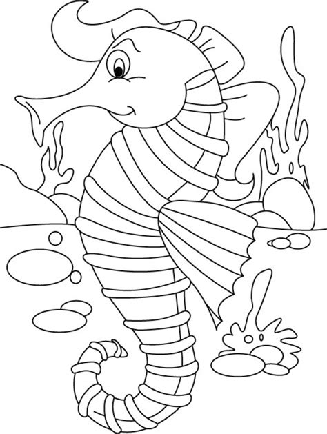 seahorse coloring page 20 free printable seahorse coloring pages