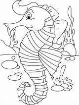Seahorse Coloring Pages Horse Printable Sea Seahorses Worksheets Safety Colouring Sheet Mister Adult Worksheet Everfreecoloring Unicorn Ears Language Drawing Animal sketch template