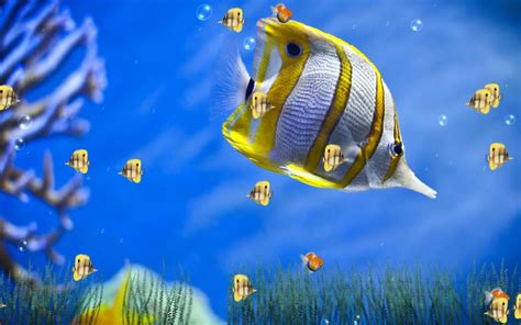 Fish Animation Wallpaper Free - wallpaper free wallpaper