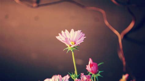 flower wallpaper flowers wallpaper  fanpop