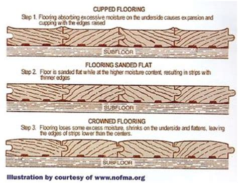 Wood Floor Cupping Water Damage water damaged flooring water damage mold removal