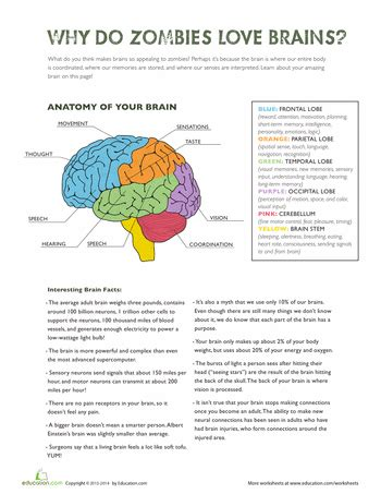 parts of the brain worksheet for grade 4 parts of the brain science worksheets