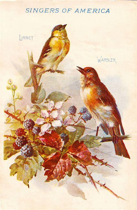 vintage clip art blackberry birds  autumn