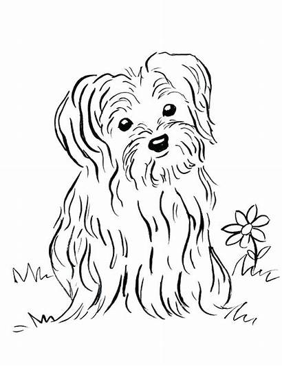 Coloring Pages Puppy Yorkie Printable Drawing Maltese