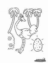 Ostrich Coloring Animal Printable Egg Colouring Preschool Animals Crafts Kindergarten Activities Cartoon Pets sketch template