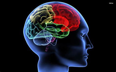 Digital Brain Wallpaper by 16152 Human Brain 1920x1200 Digital Wallpaper