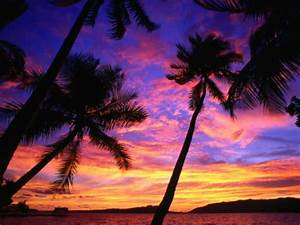 Palm Trees - Here are some palm trees in front o...