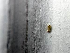 Mückennester In Der Wohnung : kleine tiere in der wohnung was ist das badezimmer ~ Watch28wear.com Haus und Dekorationen