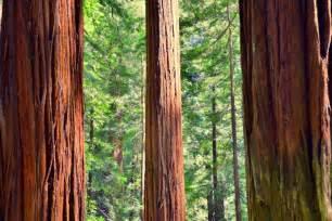 Drive through Redwood Trees California