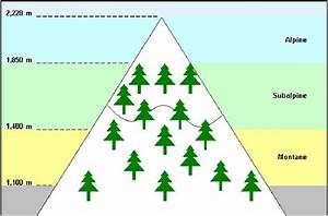 Diagram Depicting Mountain Habitats  The Alpine Region