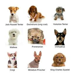 types of small dogs