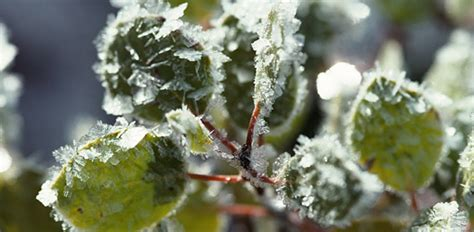 How To Protect Your Garden From Frost And Freeze Today's