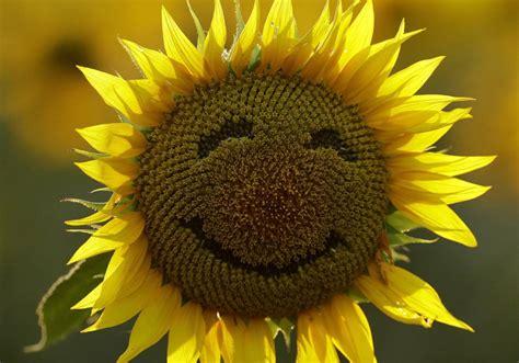internacional la felicidad aprender  ser felices