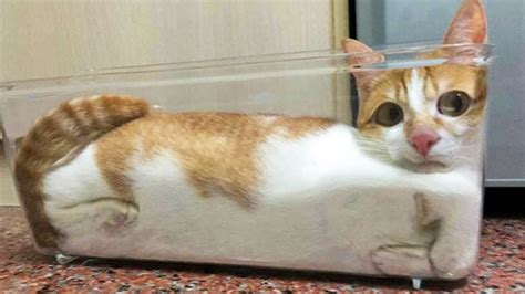 funniest cats  dogs awesome cute pet animals life