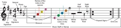 In the table below can you find what versions of supermemo the musical terminology collection is compatible with. Fretless Finger Guides | Basic music terminology
