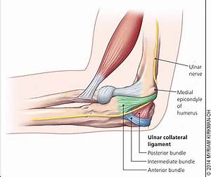 Lateral Ulnar Collateral Ligament - Anatomy