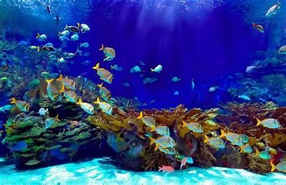Underwater Deep Mural Murals Wallpapers Wall Background