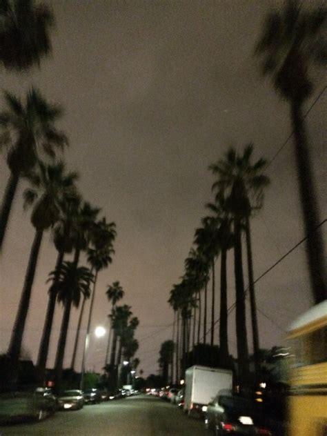 los angeles palm tree tumblr
