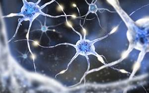 New Brain Cell Interaction Study Technique Could Impact MS Research Multiple Sclerosis News Today Tysabri
