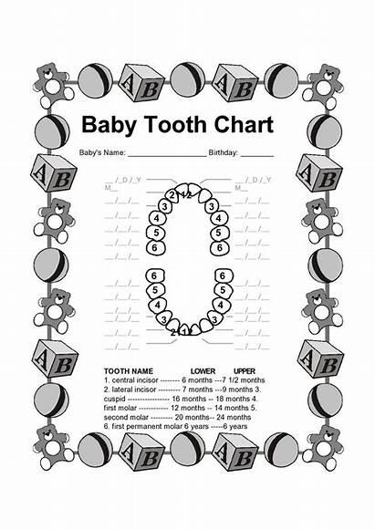 Tooth Teeth Dental Chart Printable Facts Charts