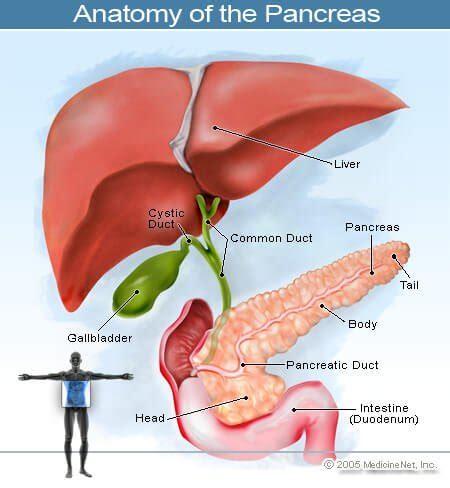Pancreatic Cancer Symptoms Signs