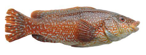 les poissons cuisine à l 39 ouest