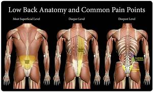 What structures make up the back? What causes lower back ...